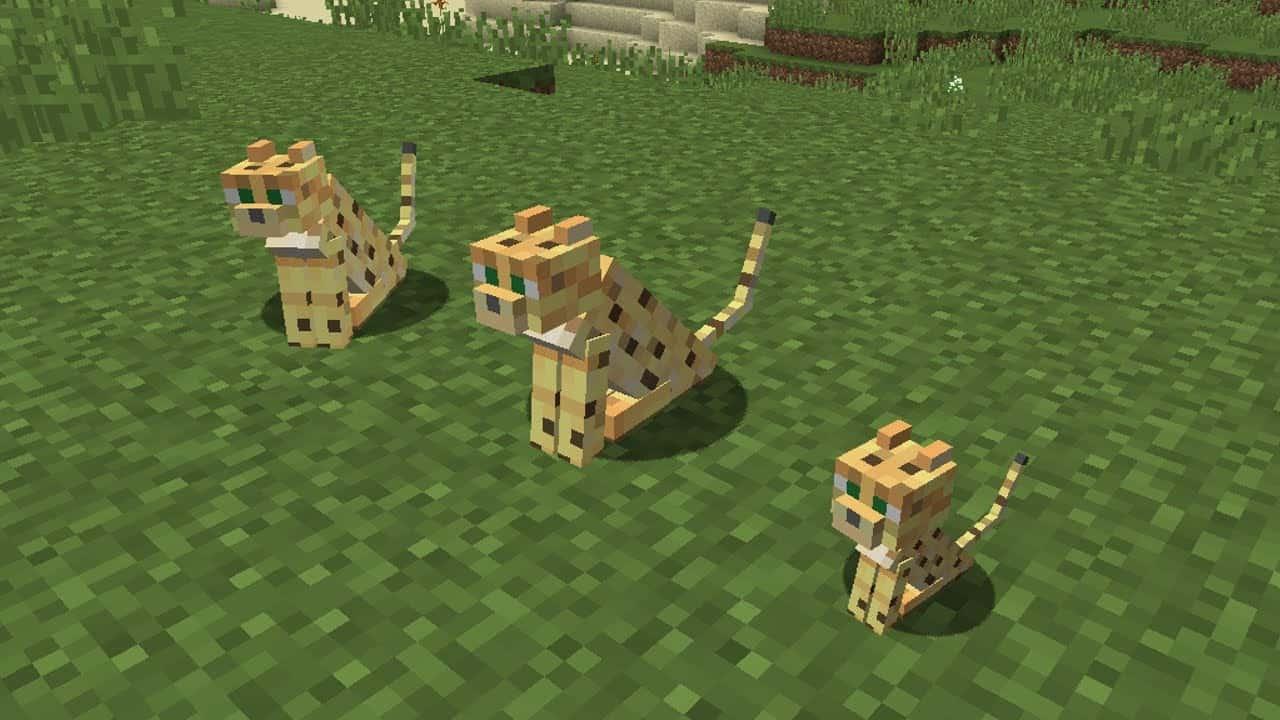 tame a cat in minecraft